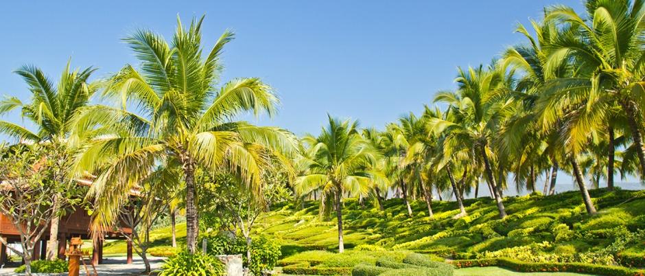Coconut-Palm-Tree